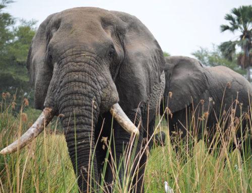 Los ciegos y los elefantes